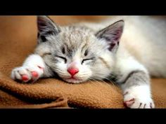 10 Hours of CAT PURRING SOUND | 3D High-Fidelity Sound | Soothing Sound | Sleep Meditation | Yoga - YouTube