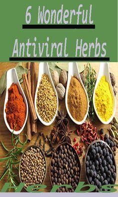 6 Wonderful Antiviral Herbs