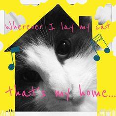 Wherever I lay my cat... #catsongs #cats #caturday