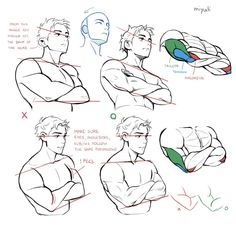 """""""Updated notes on arm muscles. Body Reference Drawing, Drawing Reference Poses, Anatomy Reference, Drawing Poses, Drawing Tips, Anatomy Drawing Practice, Drawing Hair, Hand Reference, Gesture Drawing"""