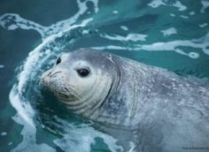 Eccezionale, segnalato un cucciolo di foca monaca nel Tirreno per la prima volta dopo decenni - Greenreport: economia ecologica e sviluppo sostenibile