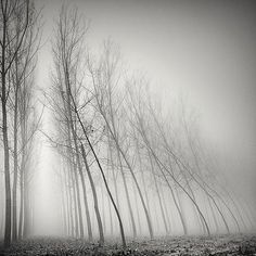 Long Exposure Foggy Tree Photography by Pierre Pellegrini