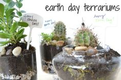 I really want to make a terrarium this summer!