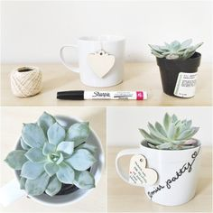 DIY potted succulent teacher gifts! Super cute, inexpensive and useful.