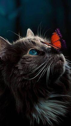 - Katzen - - – Katzen – Les images impressionnantes de diy face mask que l'on propose pour vous Un - Cute Baby Cats, Cute Little Animals, Cute Cats And Kittens, Kittens Cutest, Baby Animals Pictures, Cute Animal Drawings, Cute Animal Pictures, Pretty Cats, Beautiful Cats