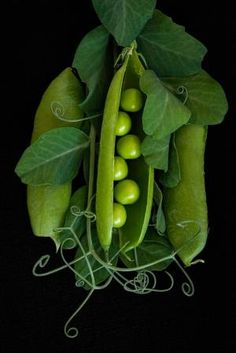 Peas in a Pod by ginacoxphotography - Verdura Vegetables Photography, Fruit Photography, Still Life Photography, Fruit And Veg, Fruits And Vegetables, Growing Vegetables, Photo Fruit, Beautiful Fruits, Shades Of Green