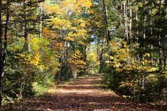 Autumn Road ~ Sewell Road in the UMO research forest.