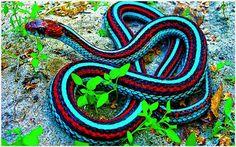 Blue Snake Red Snake Wallpaper | blue snake red snake wallpaper 1080p, blue snake red snake wallpaper desktop, blue snake red snake wallpaper hd, blue snake red snake wallpaper iphone