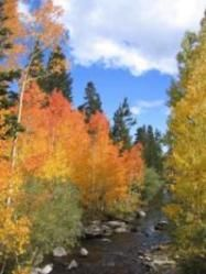 Mammoth lakes area fall colours - painting trip?