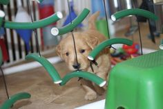 Brain Training for Dogs: 7 Mental Stimulation Games to Keep Your Pup Sharp - Good Doggies Online Brain Games For Dogs, Dog Games, Brain Training, Dog Training, Training Tips, Puppy Playground, Dog Activities, Elderly Activities, Dementia Activities