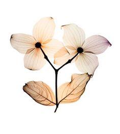 floral radiographs