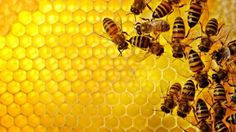 The Secret (And Miraculous) Honeybee 'Medicine' That Can Heal Almost Anything