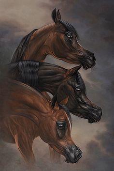 Beautiful Arabian Horses, Pretty Horses, Horse Drawings, Car Drawings, Arte Equina, Pur Sang, Arabian Art, Horse Face, Spirited Art