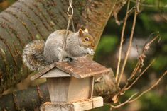Northeastern Grey Squirrel Eastern Gray Squirrel, Bird Feeders, Grey, Outdoor Decor, Photography, Home Decor, Gray, Photograph, Decoration Home