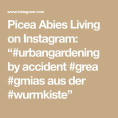 "Picea Abies Living on Instagram: ""#urbangardening by accident #grea #gmias aus der #wurmkiste"""