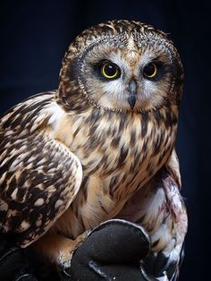 Beautiful owl!