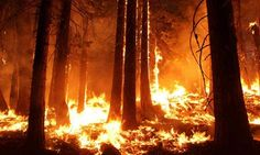 Californian Rim fire heads towards Yosemite's famed sequoia trees National park service director Jonathan Jarvis insists 'this is not a catastrophe' as massive wildfire continues to spread