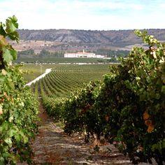 In the vineyards of Abadia Retuerta