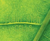 Plant Stem Cells: The Next Generation in Skin Care Technology.......The consumer's definition of anti-aging results has shifted significantly in the past few years, requiring increasingly versatile and sophisticated product formulations. Plant stem cells brings together the best of the botanical and clinical worlds to fight skin aging. Learn more....