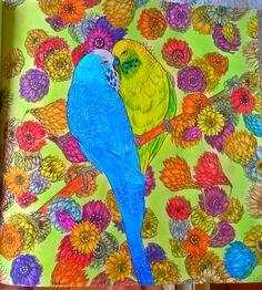 Budgerigars (parakeet), Where the Wildflowers Grow, Adriana Picker #budgerigars #parakeets #budgie #coloringforadult #coloringbook #AdrianaPicker #WhereTheWildflowersGrow