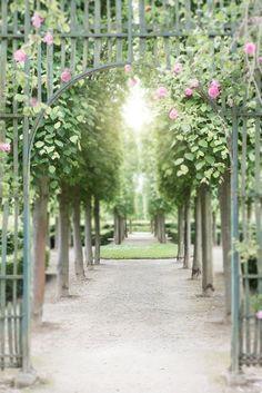 Versailles Paris Photography Pink Garden Roses