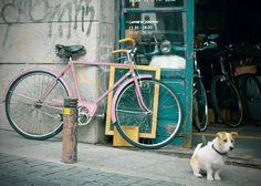 https://flic.kr/p/iZhWKV | Bike guard dog | A dog stands in front of a vintage bike shop in Madrid