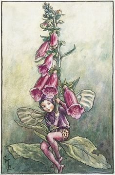 Foxglove Fairy from Flower Fairies of the Summer.   A boy fairy sits on a foxglove plant with his legs around the stem.