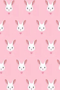 bunny rabbit // conejito