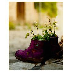 flowerpot  flower wall art print shoe heart photography by gonulk, $30.00