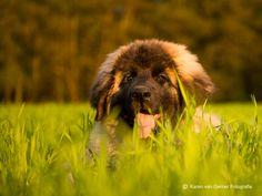 Honden fotografie op locatie | Portret van je hond in de natuur