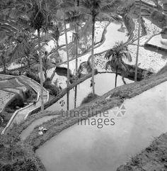 Wassergefüllte Reisfelder auf Bali, 1974 hwh089/Timeline Images #70er #70s #colorphotography #retro #nostalgic #vintage #historisch #historical #indonesia #indonesien #bali #Ernte #field #Feld #Feldarbeit #agriculture #Landwirtschaft #harvest #harvesting #riceharvest #Reis #rice #Reisernte #Reisfeld #riceplant #Reispflanze #Reispflanzen #bewässern #water #wasser #terrassenlandschaft #terrasse #palme #palmtree #terrace Image