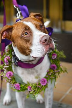 Wedding Vendors for Your Vermont Wedding - Vermont Weddings Flower Garlands, Diy Flowers, Dog Wedding, Dream Wedding, Wholesale Flowers Online, Wedding Vendors, Weddings, Pit Bulls, Big Day