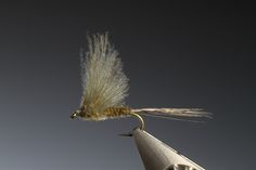 CdC Mayfly - Marc Petitjean