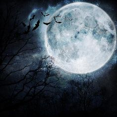 Bats Flying in the Night with a Full Moon in the Background. by molodec Landscapes Photographic Print - 41 x 41 cm Spooky Background, Landscape Background, Fall Background, Halloween Moon, Theme Halloween, Halloween Artwork, Halloween Cards, Halloween Stuff, Halloween Wallpaper Iphone