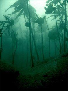 "The coast of the Isle of Islay, Scotland... ""Sea Urchins (round shapes) feeding on the kelp stems."""