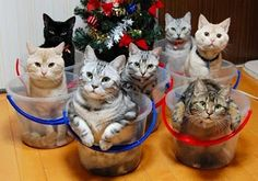 #organize your cats - ha ha! Not an easy feat to get those cats to sit and stay still long enough to take this pic