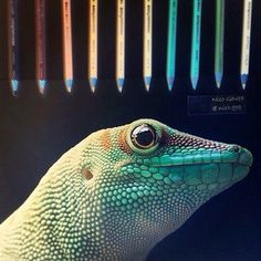 HYPER ULTRA Realistic gecko lizard drawing Amazing negative drawing by As seen on / Fish Drawings, Animal Drawings, Poster Drawing, Painting & Drawing, Bristol Zoo, Realistic Paintings, Monster Hunter, Love Art, Artsy