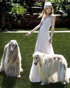 The Westchester Wedding Greek Fashion, Dog Fashion, Bridal Dresses, Prom Dresses, Luxury Lifestyle Fashion, Afghan Hound, Bridal Collection, Dress Collection, The Dress