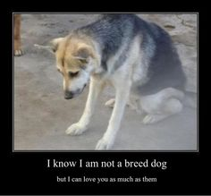 All dogs deserve love, regardless if they're a mixed breed or a single breed.