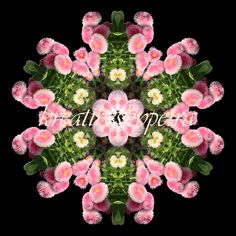Mandala ''Strohblumen rosa'' kreativesbypetra #mandala #innereruhe #inspiration #strohblumen #strawflowers Petra, Floral Wreath, Language, Wreaths, Flowers, Plants, Inspiration, Decor, Art