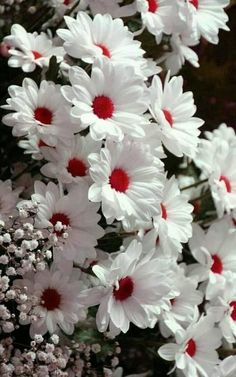 Que lindas, cores e Flores. Beautiful Flowers Wallpapers, Beautiful Rose Flowers, Beautiful Nature Wallpaper, Exotic Flowers, Amazing Flowers, Pretty Flowers, Beautiful Pictures Of Flowers, White Flowers, Wall Flowers