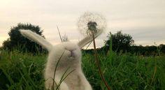 Miszek Dandelion, Felt, Flowers, Plants, Toys, Activity Toys, Felting, Dandelions, Clearance Toys