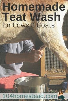 Try this homemade udder and teat wash for goats and cows. It contains no harsh ingredients like bleach, but still does the tough job of commercial cleaners.:
