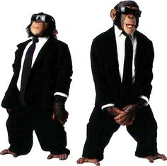 monkey with sunglasses images - Google Search