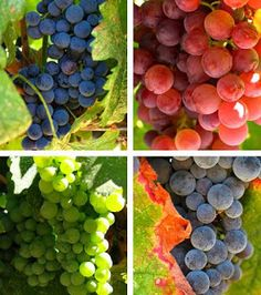 The Health Benefits of Grapes and Their Uses in Home Remedies | Nutriclue