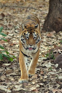 The Jungle Beauty by Abhinandan Shukla
