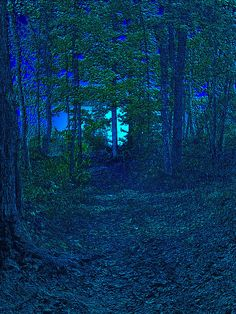 """✯ Dark Path - This reminds me of """"The Road Less Taken"""" by Robert Frost.  I know it's not a yellow wood, but ... Love it"""