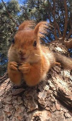 Best Picture For Cutest Baby Animals For Your Taste You are looking for something, and it is going t Happy Animals, Nature Animals, Woodland Animals, Cute Baby Animals, Animals And Pets, Funny Animals, Beautiful Creatures, Animals Beautiful, Cute Squirrel