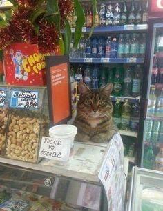 Shop Cat http://www.traveling-cats.com