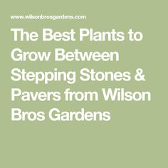 The Best Plants to Grow Between Stepping Stones & Pavers from Wilson Bros Gardens